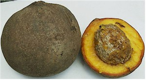 Mamey fruits (Mammea americana). Picture from Wikipedia commons.