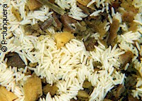 Housefly eggs (Musca domestica) on manure