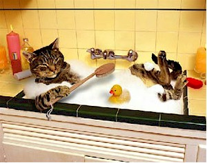 Cat bathing. Picture from www.ornauer.at