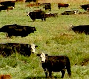 Strategic pasture management can reduce the incidence of gastrointestinal roundworms in livestock
